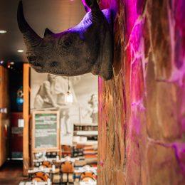 Rhino to rest